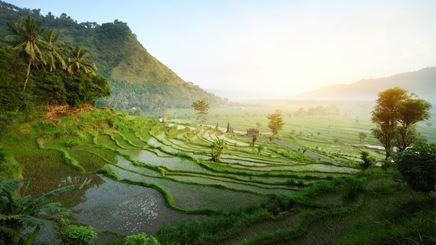 Riziere Bali Sidemen