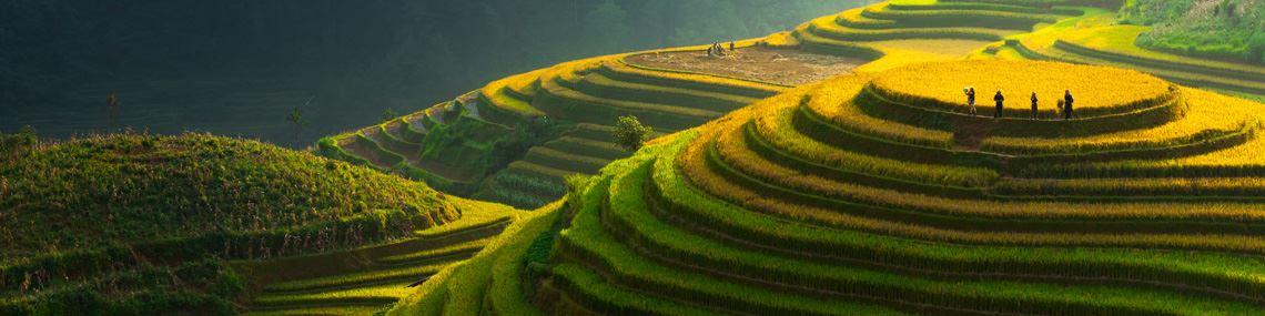 sapa-rizieres-vietnam