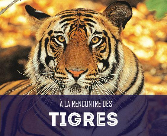 A la rencontre des tigres du Bengale