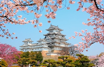 Cerisiers du château d'Himeji