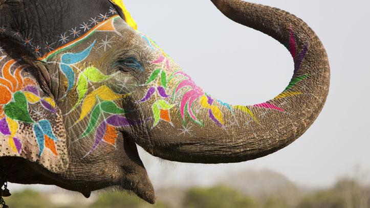 Éléphant Jaipur Rajasthan