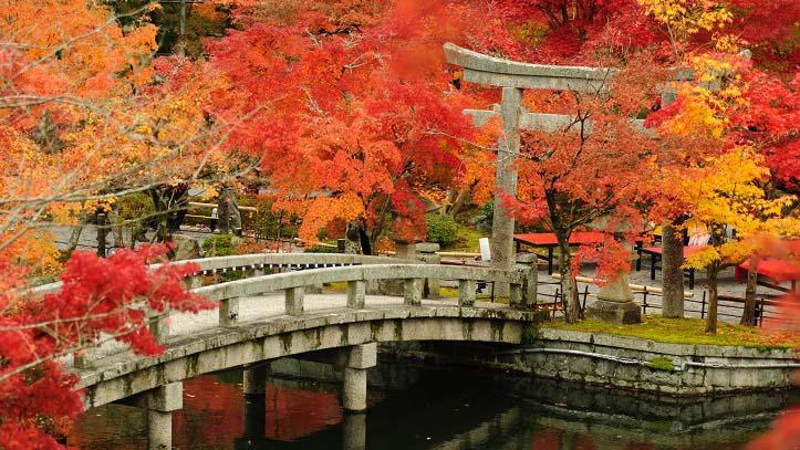 Momiji du jardin du temple Eikando à Kyoto