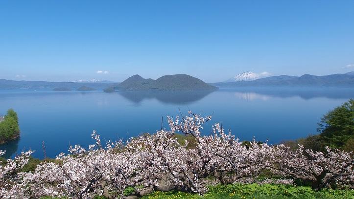 Vue sur les cerisiers du lac Toya