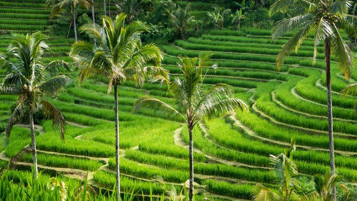 Bali Ile Jatiluwih