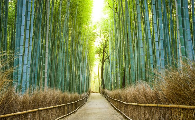 Bambouseraie-kyoto