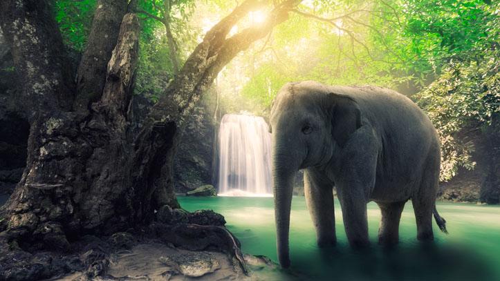 Elephant Indonésie