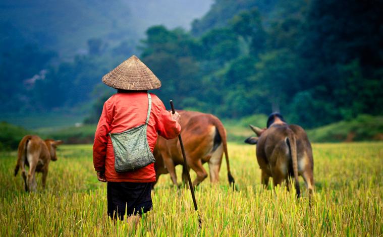homme-berger-vietnam