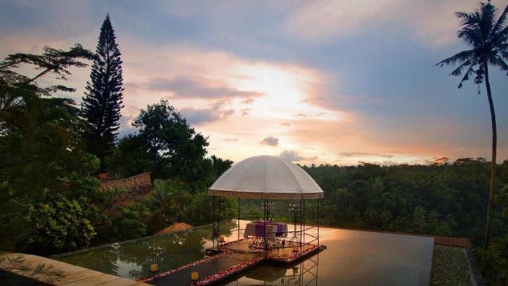 Jungle retreat vue