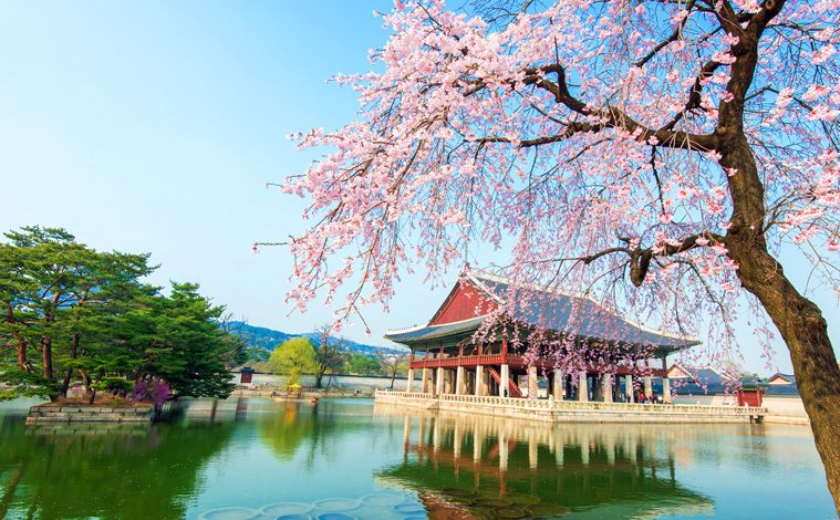 palais-Gyeongbokgung-cerisiers-liste