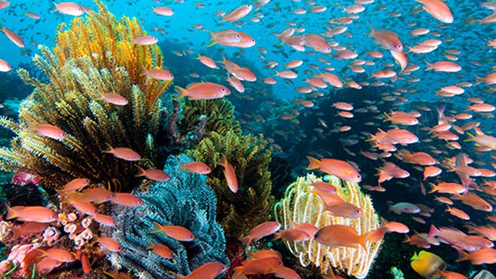 plongée wakatobi dive resort