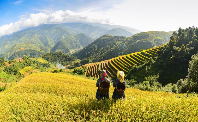 rizieres-sapa-vietnam