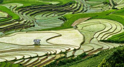 riziere-vietnam-promo