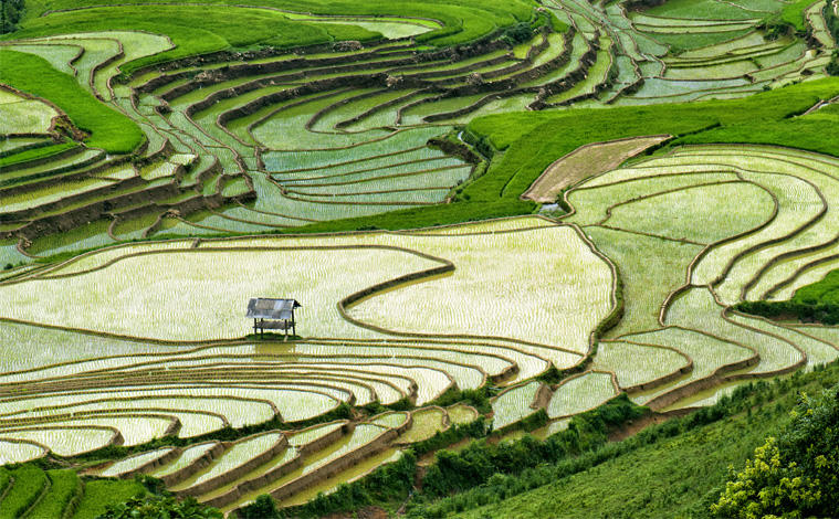 riziere-maison-vietnam