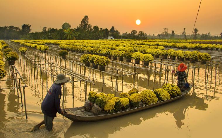 sa-dec-fleur-vietnam