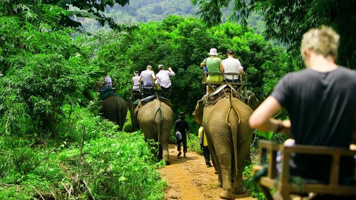 Balade sur dos d'éléphants en forêt thailandaise