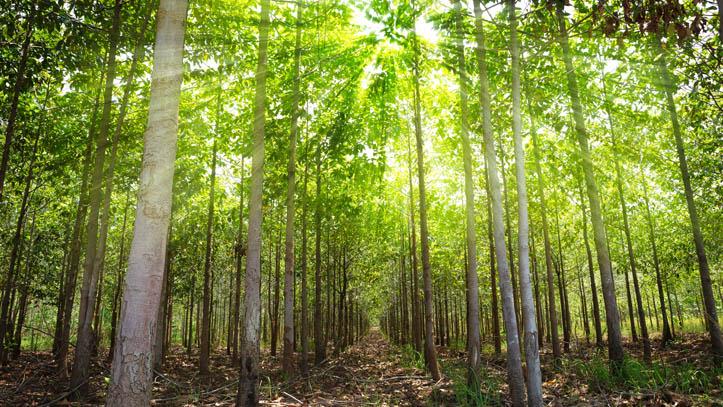 thailande foret treck nature